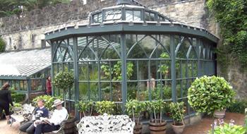 Irland Auf Klaus-peters Web-site Garten Pavillon Tropische Pflanzen